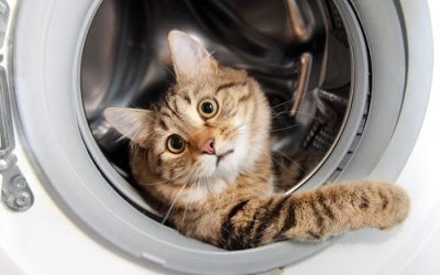Curiosity did not kill the cat!  Leverage employees to do the work