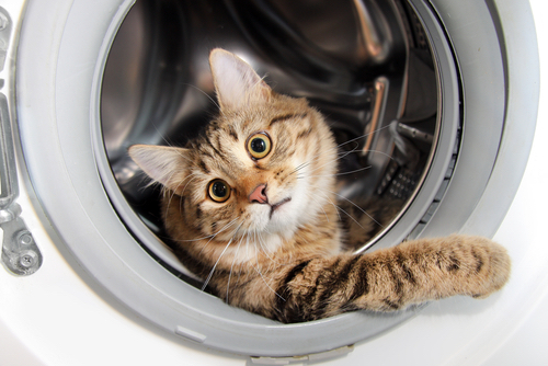 Curiosity-killed-the-cat